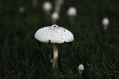 Mushroom of the Year (Joshjones 1) Tags: park green fairytale canon soft touch eat smell smushy 5ds