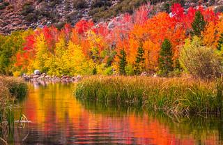 Nikon D810 California Fall Colors Autumn Foilage Fine Art High Sierras! AF-S NIKKOR 28-300mm f/3.5-5.6G ED VR from Nikon