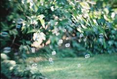 (golfpunkgirl) Tags: new uk summer test london film ava 35mm garden lomo lomography brass 58mm canoneos5 petzval artlens lomography400 june2015 petzval58mm