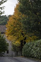 Giallo e verde (AnnaPaola54) Tags: alberi giallo autunno oro ottobre 2015 casteldicasio