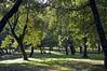 Bosco presso il lago di Vico (giorgiorodano46) Tags: autumn italy fall lago autunno lazio bosco lagodivico lagovulcanico monticimini boscoautunnale novembre2015
