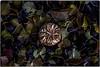 ... IMG_9608 (*melkor*) Tags: autumn art halloween nature rain pumpkin geotagged october dof experiment naturallight ground conceptual leafs melkor smallpumpkin trashbit