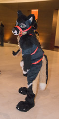 DSC_0046 (Acrufox) Tags: chicago illinois furry midwest december ohare rosemont convention hyatt regency 2014 fursuit furfest fursuiting acrufox mff2014