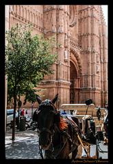 Pferde in Palma (A.Schauervilla) Tags: street espaa church spain cathedral kathedrale kirche estrada mallorca palma pferde pferd spanien palmademallorca strase