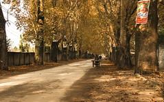 Chinar Road (Hasankazmi) Tags: road pakistan chinar abbottabad chinarroad hasankazmi