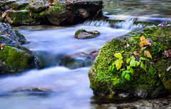 val vertova (francesco (omino del vento)2) Tags: autumn nature nikon nd d800 1635 nikon1635 dinamiccolor