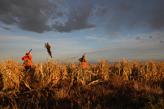 South Dakota Luxury Pheasant Hunt - Gettysburg 66