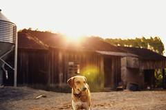 Co (Francine de Mattos) Tags: colors canon cores 50mm cachorro contraste santacatarina luznatural francinedemattos fotografeumaideia amoremformadefoto