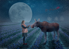 Moose like oreos (Marta Anthony) Tags: composite whimsical illustrative fineart fairytale