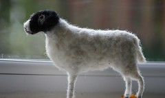 swaledale sheep (adore62) Tags: needlefelted needle felted sheep feltedfido
