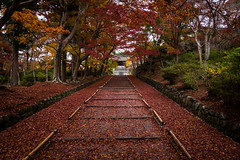 momiji '16 - autumn foliage #6 (Bishamondo temple, Kyoto) (Marser) Tags: xt10 fuji raw lightroom japan kyoto temple autumnleaves fallenleaves staircase red 京都 山科 毘沙門堂 紅葉 落葉