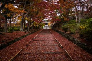 momiji '16 - autumn foliage #6 (Bishamondo temple, Kyoto)