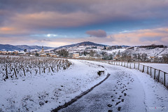 Village of Denice and landscape of Beaujolais under the snow (Gael F. Photography) Tags: aoc aop beaujolais burgundy castle church cogny countryside denice europe field france french gleize hill lacenas landscape liergues montmelas morning rhone rivolet saone snow snowed snowedlandscape village villefranche villefranchesursaone vine vineyard vineyards wine winter