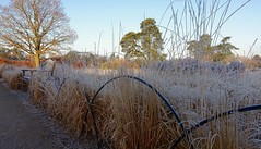 Frosty fence Friday (jeannie debs) Tags: fencefriday frost winter fence bench seat grass