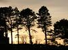 trees (odysseus62) Tags: nairn december 2016 scotland morayfirth