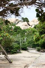 "The Casibari Boulders of Ayo Rock Formations (Aruba) (runintherain) Tags: runintherain canon450dxsi canon canonxsi caribbean lesserantilles flora trees outdoor aruba ""netherlands"" abcislands dutchcaribbean"