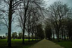 Glasgow Green (Brian Travelling) Tags: historic history historical historicscotland historicglasgow park glasgow landscape path trees footpath green grass glasgowgreen