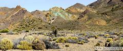 Los azulejos. Tenerife (laiavinas.bcn) Tags: azulejos teide tenerife canarias spain mountain green blue nature landscape