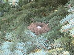 Hummingbird nest (Cabinet of Old Secret Loves) Tags: