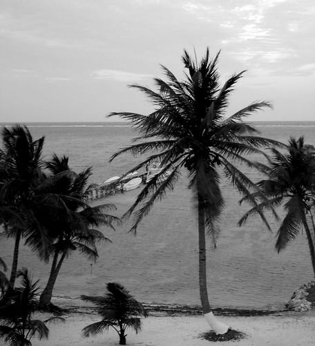 Bouvard et Pécuchet (Flaubert) face à un anglais sous les tropiques (Boyd)