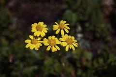 Flowers (Brian Warren) Tags: flowers colorado raw dayhike