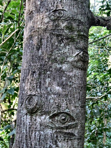 tree eyes by newilluminati.