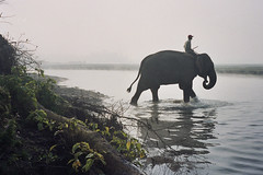 Chitwan Park / Crossing the river (Dick Verton ( more than 12.000.000 visitors )) Tags: travel nepal elephant river asia mirrorsofsociety itsongselection itsong–canoneos10d itsong–men–atwork–southeastasia kornak fivestarsgallery chtiwan canoneosd10