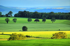 Carse of Gowrie - Hazy Scottish View (Magdalen Green Photography) Tags: trees green nature yellow landscape ilovenature scotland interestingness cool dundee scottish lazy fields iain hazy magdalengreen tayside hdr ecosse gowrie carseofgowrie fnmc gtaggroup goddaym1 scottishlandscapes exploretop20 calmnaturescene iaingordon magdalengreenphotography