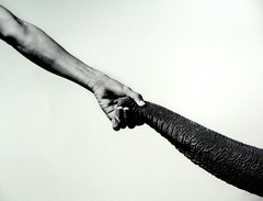 now who is michelangelo? (weef kichards) Tags: bw elephant adam arm god touch human trunk reach michelangelo biblical