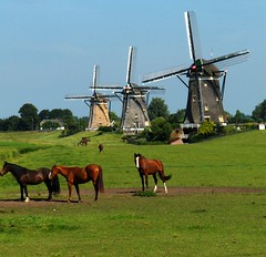 TRADITIONAL DUTCH LANDSCAPE NEAR STOMPWIJK (Akbar Simonse) Tags: horses nature windmill animals architecture buildings natuur dieren molen landschap paarden stompwijk theperfectphotographer 200000000stagelovers akbarsimonse