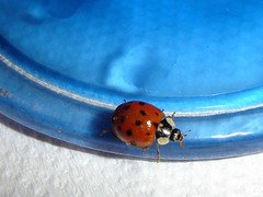 Lady Bug - by Carol^-^