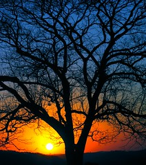 another sunset, another tree (joaobambu) Tags: blue winter sunset pordosol brazil orange sun color tree topf25 colors silhouette yellow topv111 azul brasil topv2222 backlight canon catchycolors contraluz print countryside topf50 topv555 topv333 topf75 bravo colorful branches topv1111 stock brasilien gradient topv777 backlit leafless topv11111 árvore galhos sonneuntergang topf15 brasile pro1 topf400 drivingwithdad amadeuamaral topf65 topv33333 topv22222 specnature gaiada imagekind eliteimages