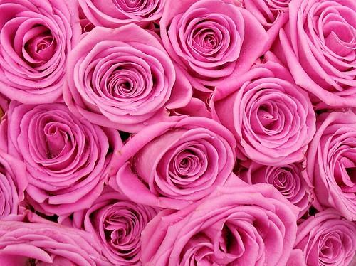 Flickriver coanriritas most interesting photos shocking pink mightylinksfo