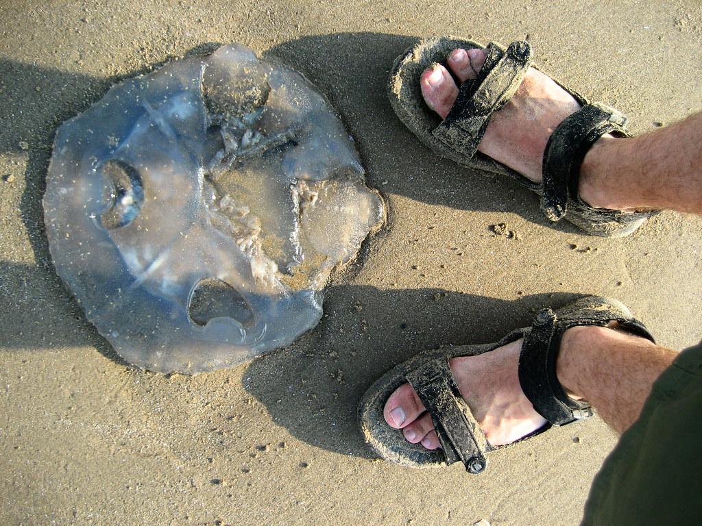 Jellyfish, Ynyslas 21-07-06