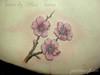 Sakura tattoo by Plai's Tattoo Just finishing today