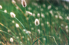 Plantas (DavidGorgojo) Tags: verde green plantas minolta dynax spxi 50club