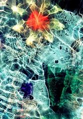 Underwater Explosion (Reciprocity) Tags: light abstract colour film analog 35mm nikon experimental superia plastic refraction analogue lensless caustics photogram nikomat nikkormat lightart printscan experimentalphotography reciprocity refractograph