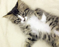 This Little Tabby Mix Kitten is Called Spectacles (Pixel Packing Mama) Tags: 510fav catwomen gorgeous whiskers aww catsandkittensset ilovemycat furryfriday omg nuggets catsdogs cutecat awwww funnyhaha terrific cutekittens animalfeelings catskittensset thecatsmeow catlovers heartlandhumanesociety notmycat beautifulcats top20cats familyfurrythingsorboth favorites5 catpix pixelpackingmama meowscollector catssmalltobig dorothydelinaporter laughoutloud favorites10 canonpowershota510a520 worldsfavorite i500 notmypet ourcatcompanions melfanclub somebodyelsescat catsworld welovelatte crazyaboutcats tobysgroupies v3000 catsaremyfriends everbodywantstobeacat interestingness44528july06 mywinners bonzag favoritedpixset mostinterestingaccordingtoflickralgorithmset spcacatspool spcacats catskittensthatarenowonorwereoni500flickrexplore madecatoftheweekoncatsworld catsworldcatoftheweek reallyunlimitedpool 8prettykittycomments views1000andupdomesticcatsonlypool 1025favouritespool allcatsallowedpool furryfuncutefunnyanimalspool uploadedsecondhalfof2006set chosenbyflickrexploreset cbatdef defdefdef watchfor4000 oversixmillionaggregateviews over430000photostreamviews
