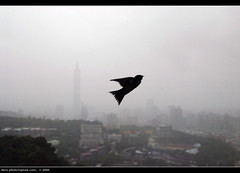 Taipei in the morning of typhoon Kaemi (*dans) Tags: alone taiwan taipei taipei101 swallow typhoon  kaemi