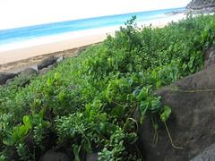 hawaii_brah_039 (douglemoine) Tags: travel hawaii kauai napalicoast