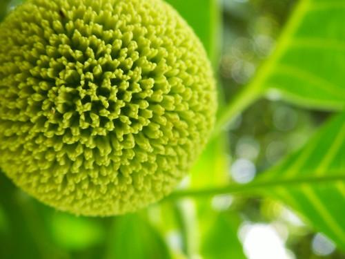 http://farm1.static.flickr.com/72/215964835_1b491d501c.jpg