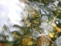 บ่อปลาคาร์ฟหน้าบ้าน น้ำสวย เย็นสบาย