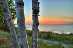 Birch & Sunset (snapstill studio) Tags: sunset lake tree beautiful michigan lakemichigan birch hdr petoskey littletraversebay martinmcreynolds