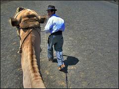 Follow me (freddie2310) Tags: spain screensaver lanzarote canarias dromedary camel canaries canaryislands hdr camello désert dromadaire chameau photomatix decoratedanimal
