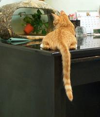 EPSN6696_1 (jacky elin) Tags: orange cats cat mix kitten tabby miumiu