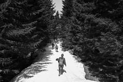 Hesitation (Arthur Huet) Tags: wood people bw snow nature monochrome pine trek path walk hike