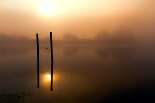 A Misty Tringford