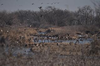 Nebraska Waterfowl Hunting 8