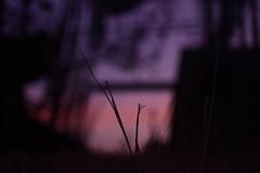 Keep Your Promise (J.J.Evan) Tags: sunset grass atardecer ruins factory pasto ruinas fábrica
