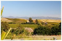 Vineyards (sandiegoiris) Tags: colors view winery vineyards artesa